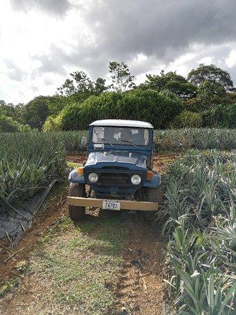 Sarapiqui, Costa Rica: IMG_20180904_152804_large.jpg