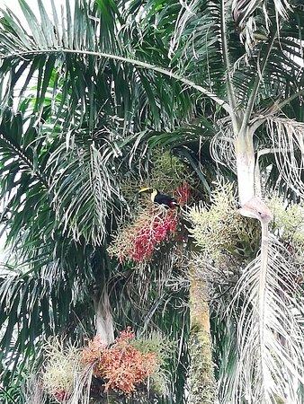 Sarapiqui, Costa Rica: IMG_20180904_160505_large.jpg