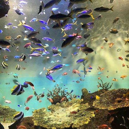 Miyajima Public Aquarium