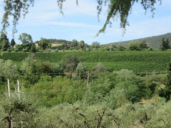 Il Casale del Cotone : Vineyard views from property