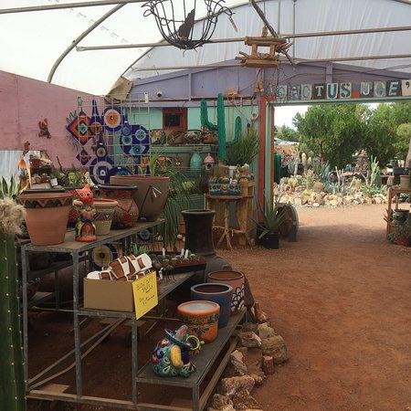Photo0 Jpg Picture Of Cactus Joe S Blue Diamond Nursery Las Vegas Tripadvisor
