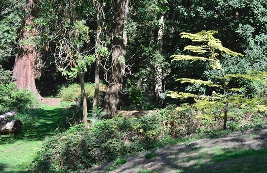 Hertfordshire, UK: View into the forest at Clinton-Baker Pinetum