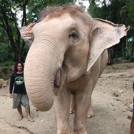 Elephants Retirement 9 Dee: photo0.jpg