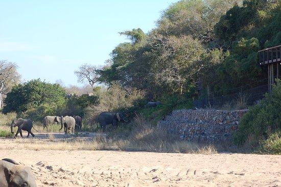 Jock Safari Lodge: Viewing elephants and lodge while on drive