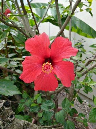 Botanischer Garten (Ruhr Universitat Bochum): IMG_20180905_154554_large.jpg