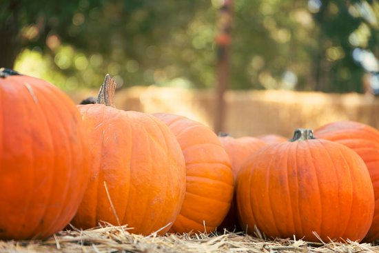Green Cove Springs, FL: Pumpkin Patch