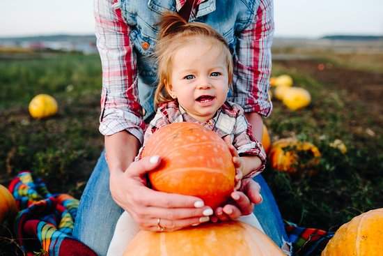 Green Cove Springs, FL: Little Girl with Pumpkins