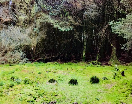 Derry, UK : Ancient stone circle and chambered grave in the heart of Loughermore Forest