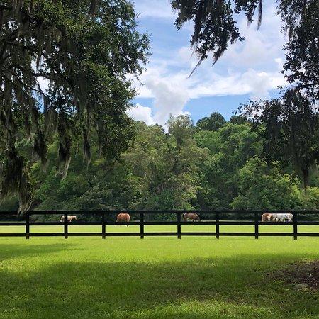 Boone Hall Plantation: photo2.jpg