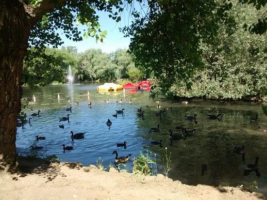 Locke Park