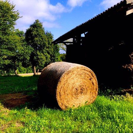 Callac, Frankreich: photo2.jpg