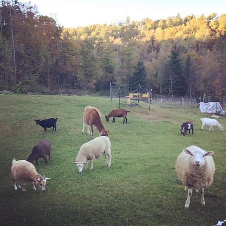 Little Red Barn Farm Sanctuary
