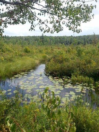 Charlemont, MA: The overall bog