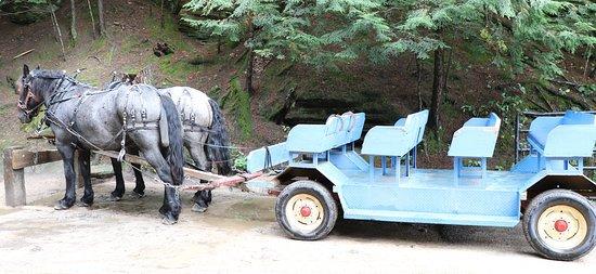 Horses and wagon