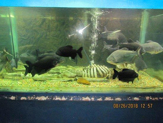 Abyss Marine Aquarium 1000 Aquarium Ideas