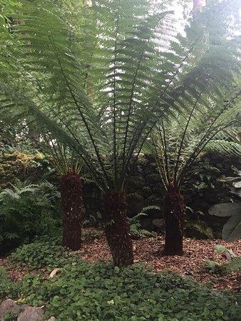 Plas Cadnant Hidden Gardens: Tree palms?