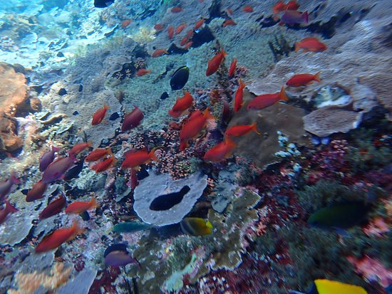 Lembongan Water Sport: The fishes seen in one of the snorkelling site.