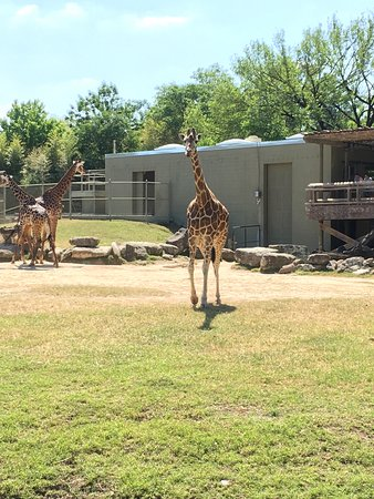Cameron Park Zoo: Tall, long and will follow you around the exhibit