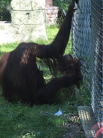 Cameron Park Zoo: Momma and baby in the shade