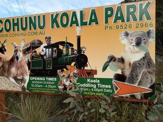 Koala dating