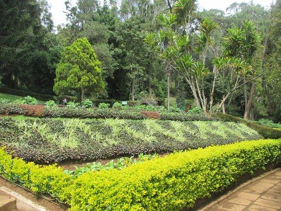 Sim`s Park: Landscaped garden