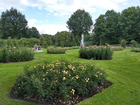 Winschoten, The Netherlands: Enkele van de rozenperken in het rosarium