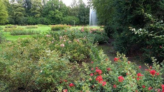 Winschoten, The Netherlands: Rozen, vijver, fontein en beeld in vijver