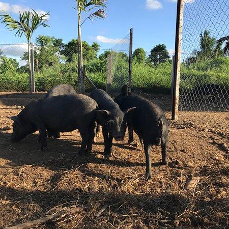 Camarines Sur Province, Filippinerna: Sonrisa Farm