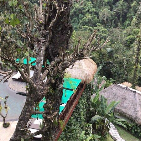 Nandini Bali Jungle Resort & Spa : photo1.jpg