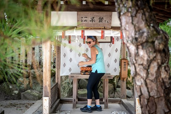 Hidden Kyoto E-Biking: Rituals