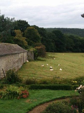 Buckland Monachorum, UK: Blick aus unserem Zimmer