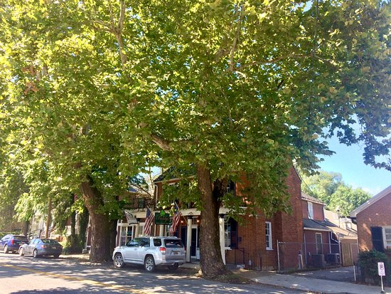 Paddy's hides under two massive, historic sycamore trees.
