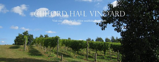 Chilford Hall Vineyard