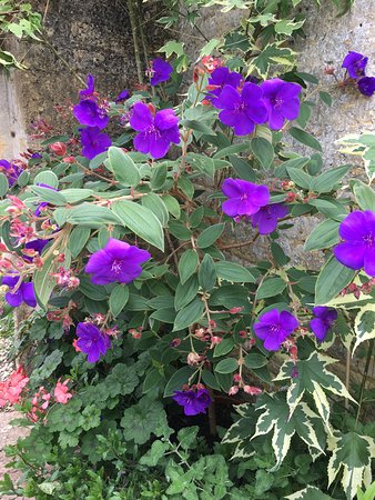 Bourton-on-the-Hill, UK: Wonderful clematis