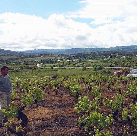 Curanipe, شيلي: Coronel de Maule. Vinedos centenarios de secano. Ven a probar esquicitos vinos de cepas unicas.