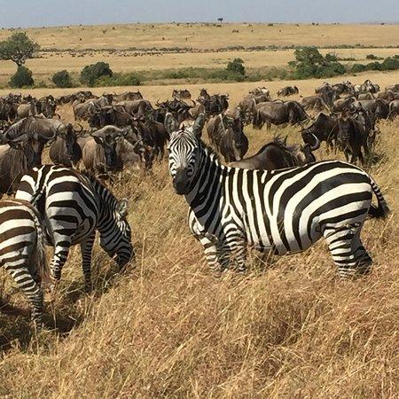 Masai Mara Manyatta Camp: photo5.jpg