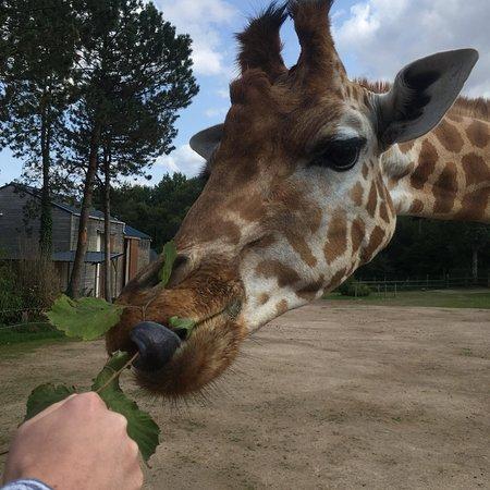 Zoo De Jurques Tickets Restaurants