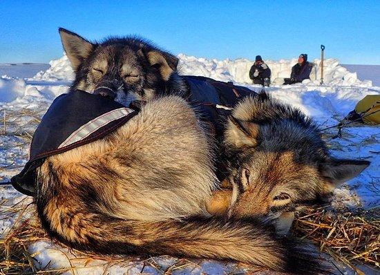 Fairbanks, AK: Arctic camp life.