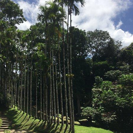 Jardin de Balata : photo0.jpg