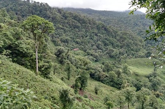 San Gerardo Reserveのバードウォッチングハイキング