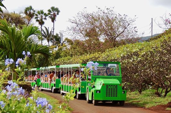 The Tropical Express at Maui Tropical...