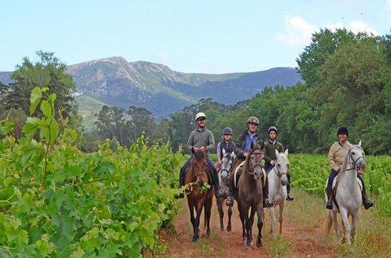 ARRÁBIDALOURO TRAIL MOUNTAINの馬の乗り物