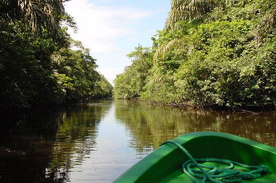 Tortuguero National Park ...