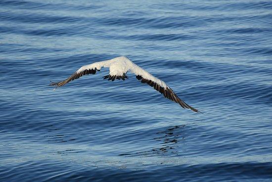 Zeepaard Boat Tours: fly