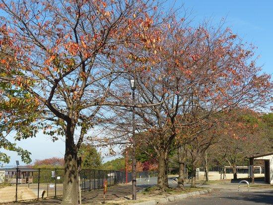 Chausuyama Park