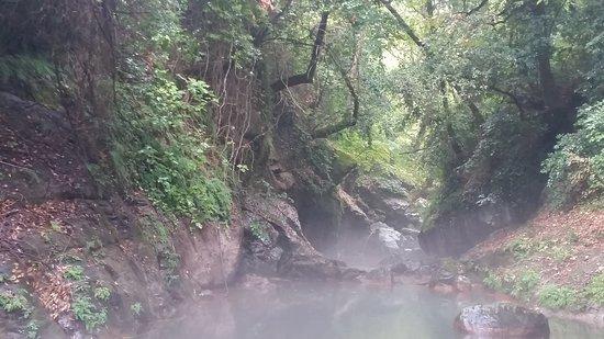 """Kokkino Nero, Greece: zalesiony wąwóz, którym płynie strumień zasilający """"Oko Zeusa"""""""