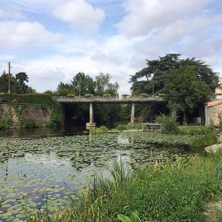 Montaigu, France: photo1.jpg