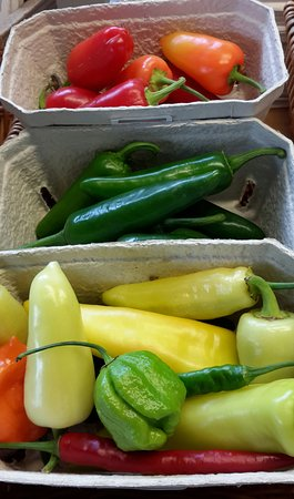 Loddiswell, UK: fresh chillies, usually July to Nov
