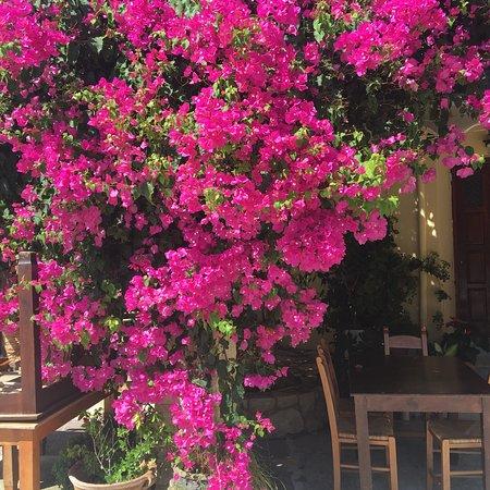 Maza, Greece: photo1.jpg