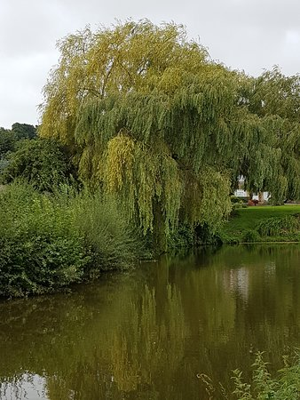 Grand Western Canal: Beautiful scenery on our cycle ride
